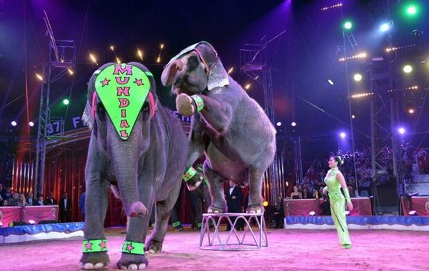 Entradas El Gran Circo Mundial 5 €
