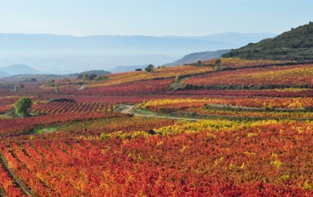 Descubre la Capital del Vino: HARO