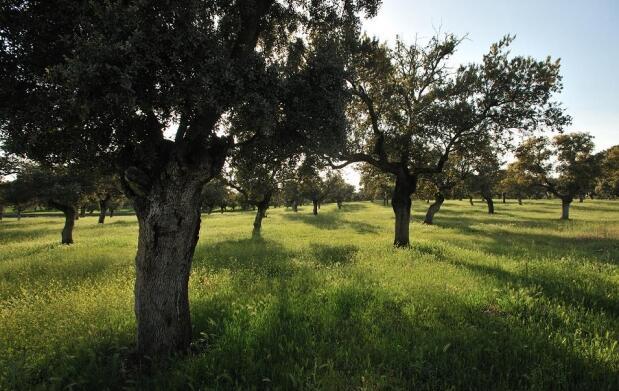Sierra de Córdoba: dos días de lujo