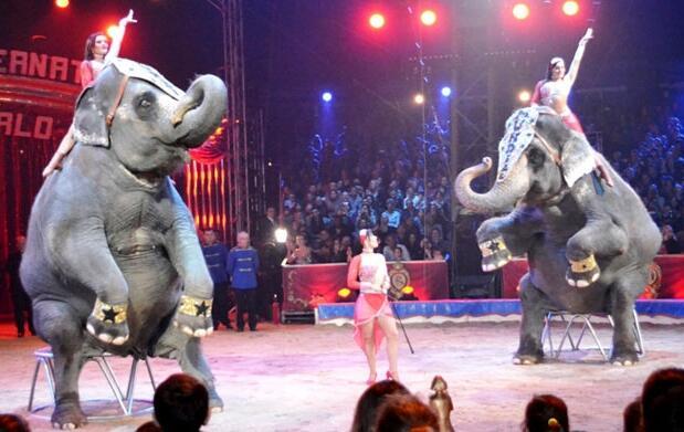 Entradas Gran Circo Mundial