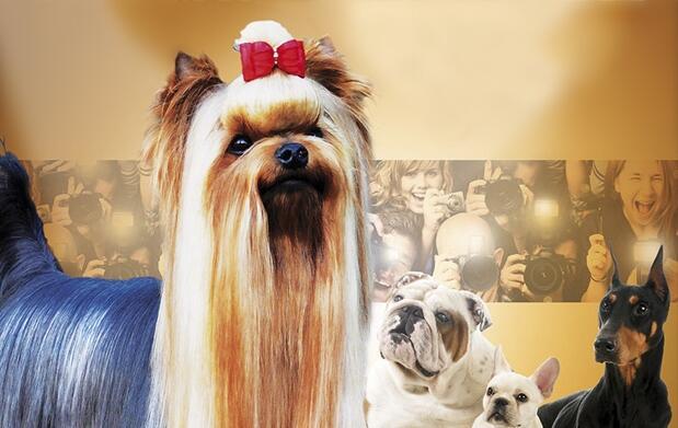 Exposición Nacional-Internacional Canina