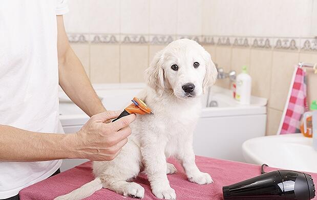 Corte de pelo para perro o gato