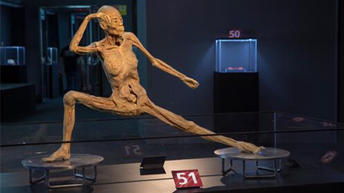 Entradas Human Bodies Barcelona 2018