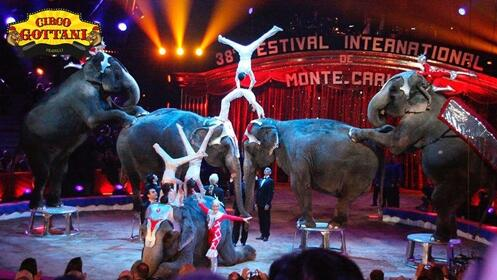 Entradas Circo Gottani en Madrid