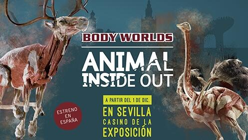 Exposición Animal Inside Out