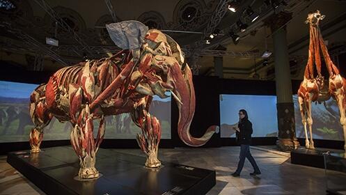 Exposición Animal Inside Out