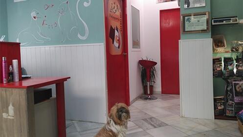 Peluquería y baño para tu mascota