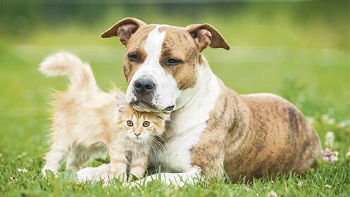 Residencia canina - felina
