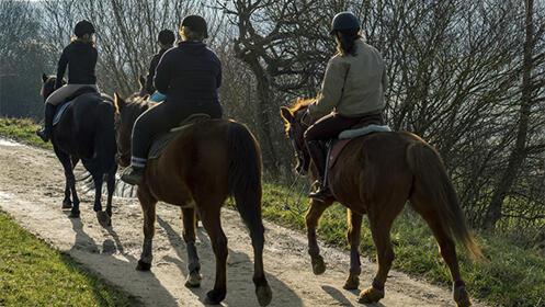 Paseo a caballo por la orilla del Guadalquivir