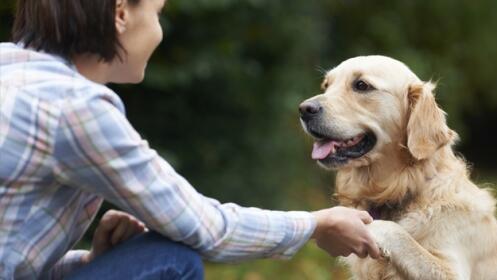 Residencia canina: alojamiento para tu perro